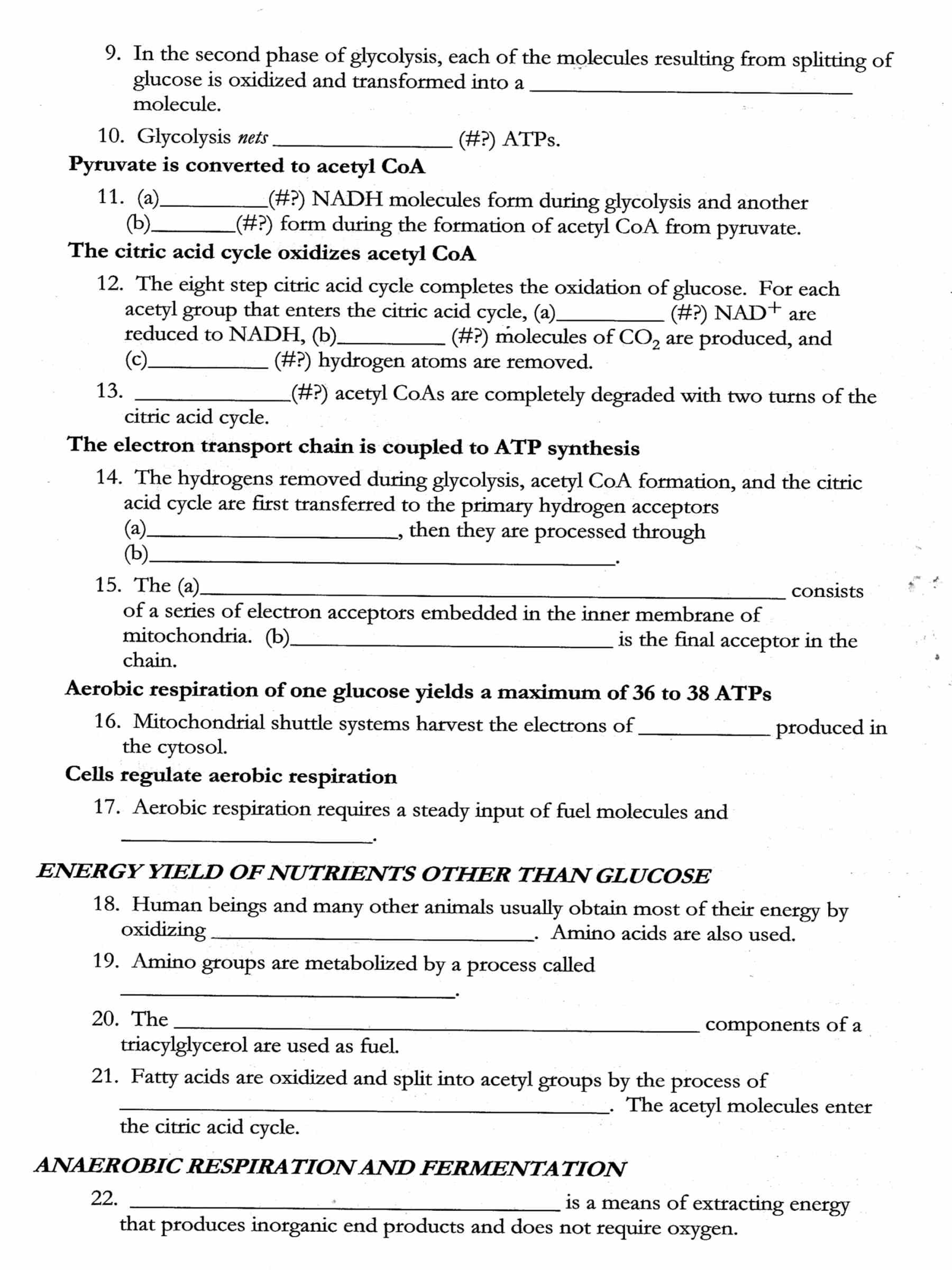 Printables Cellular Respiration Worksheet cellular respiration worksheet davezan 2 hcc learning web