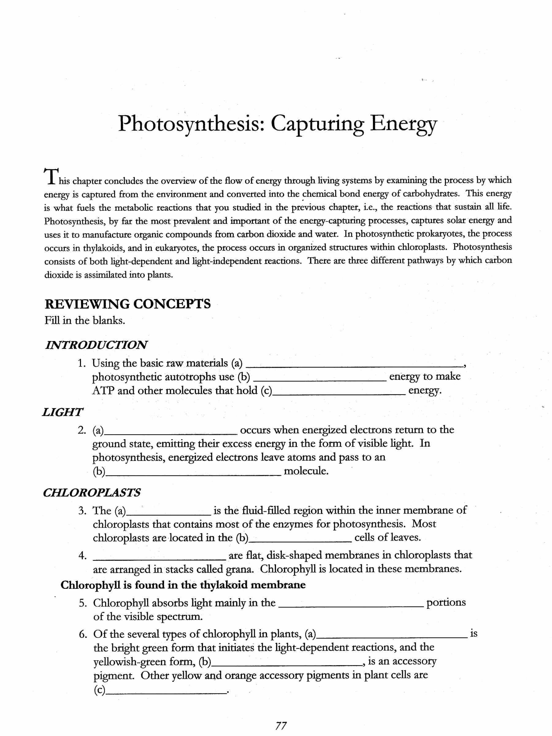 Photosynthesis Worksheet - carolinabeachsurfreport