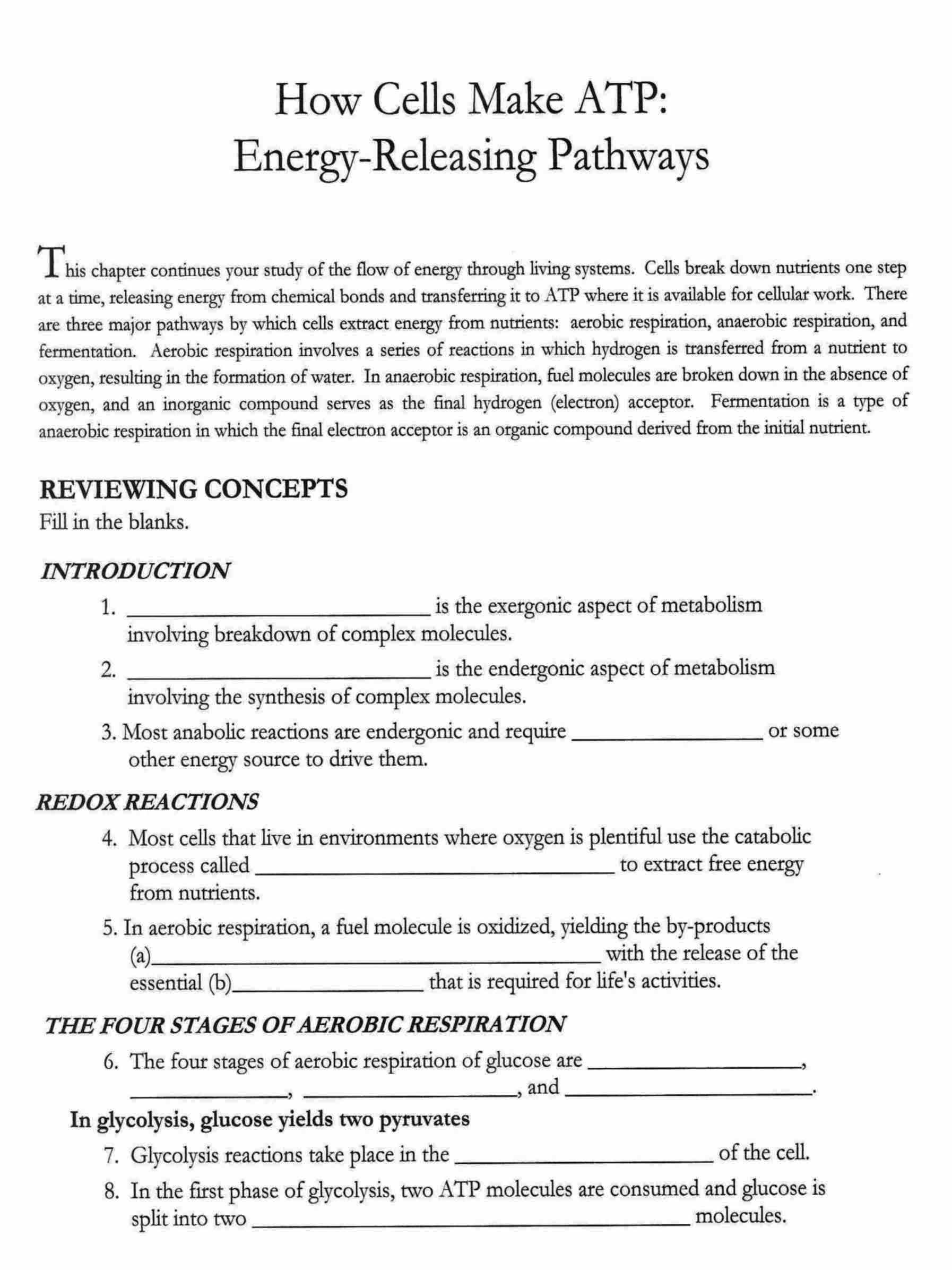 Cellular respiration worksheet answers section a intro to cellular respiration