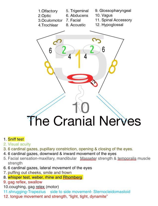 Cranial Nerves Helper