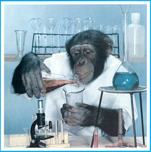 Unsafe Chimp